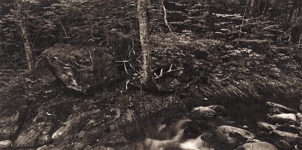 Ambler|Meditations-vermont-hedgehog.jpg