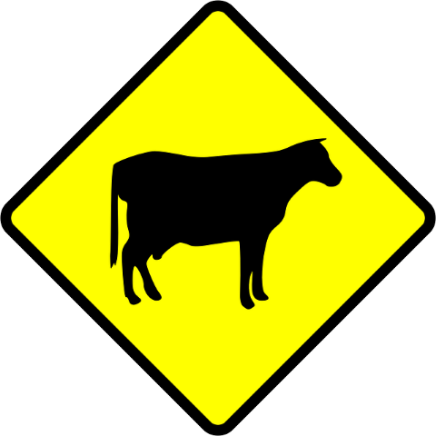 yellow-cow