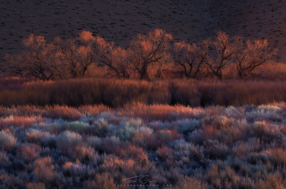 Colorful winter foliage in Owens Valley