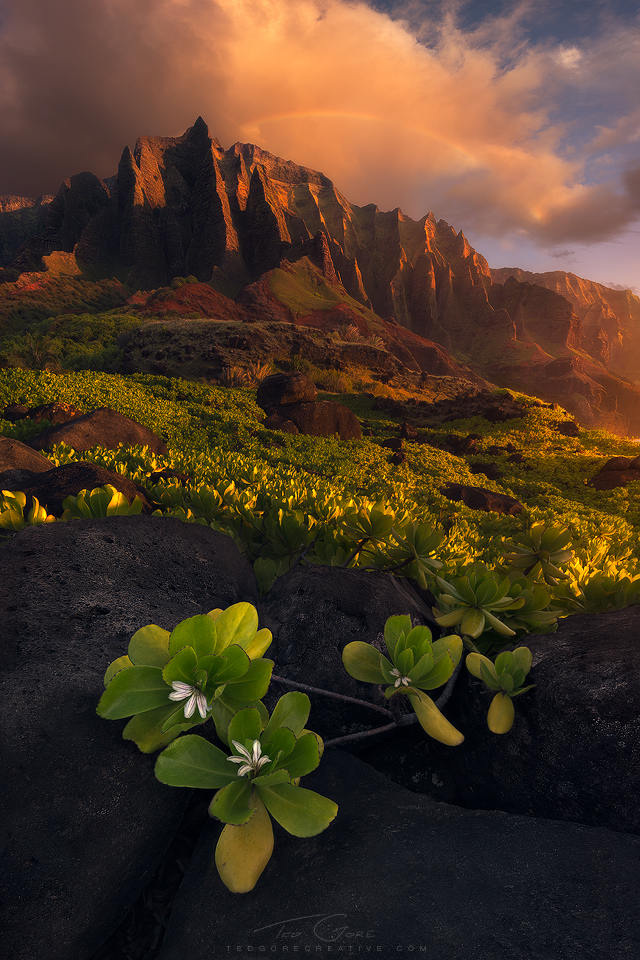 In this image from Kauai, the greens of the Naupaka, the red/orange of the cliff and clouds and the blue of the sky approximately make up a triad color harmony.