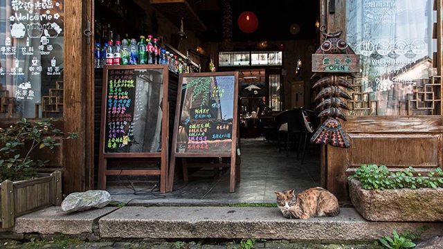I am the bouncer, behave or I will scratch you out. #streetphotography #catstagram #catography #cat #pussytat #pussytatsfromeverywhere #kanmanphotography #travelphotography #shanghai #china #bouncer
