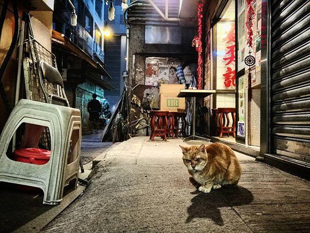 #street #streetphotography #streetcat #cat #seniorcat #catstagram #hkig #pussytatsfromeverywhere #hongkong #kanmanphotography