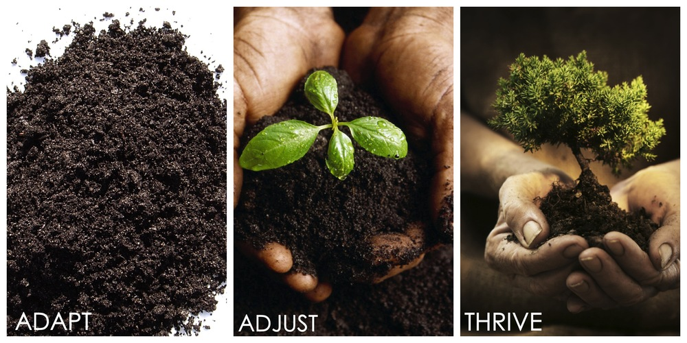Adapt Adjust Thrive