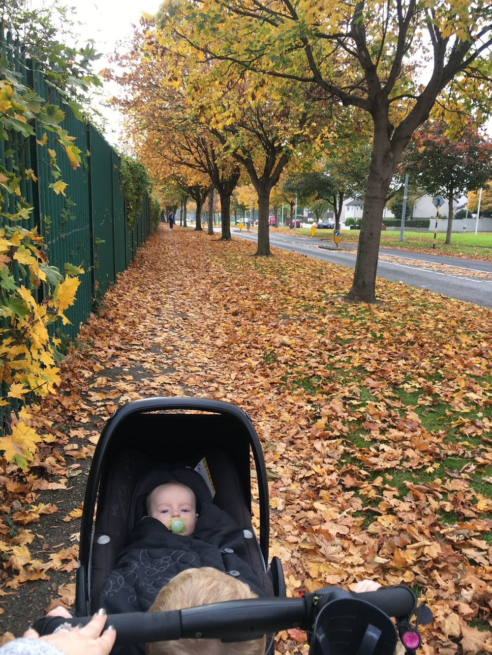 We went for an Autumn walk today!