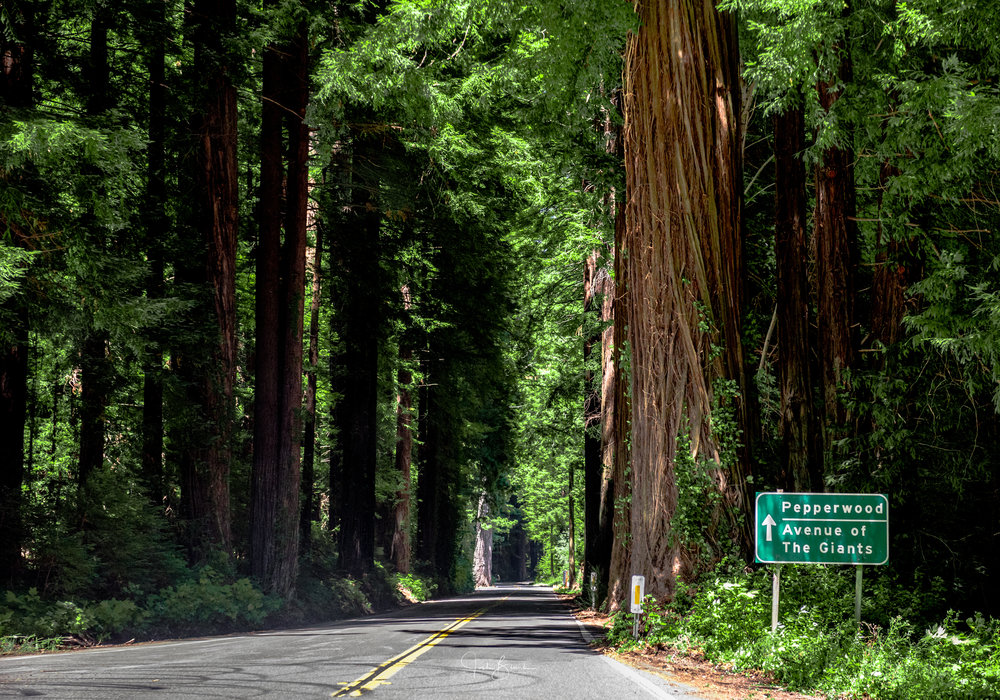 California-2911.jpg