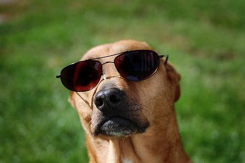 dog friendly patio dallas texas state allen