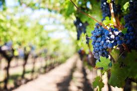 napa valley wine.jpg