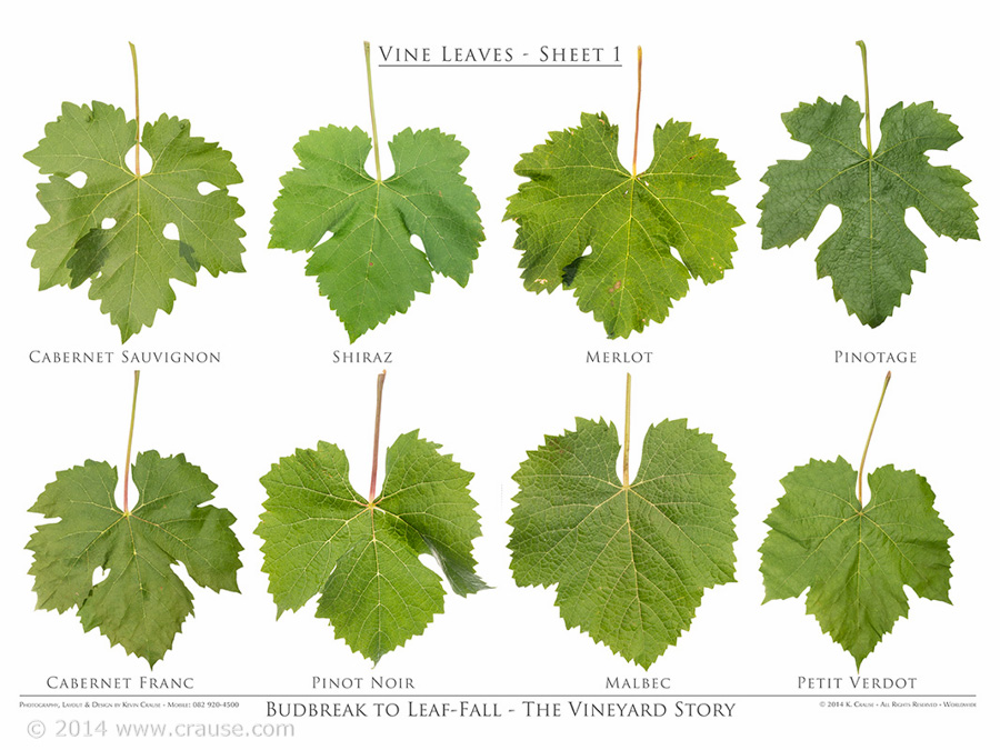 Cultivars_16.jpg