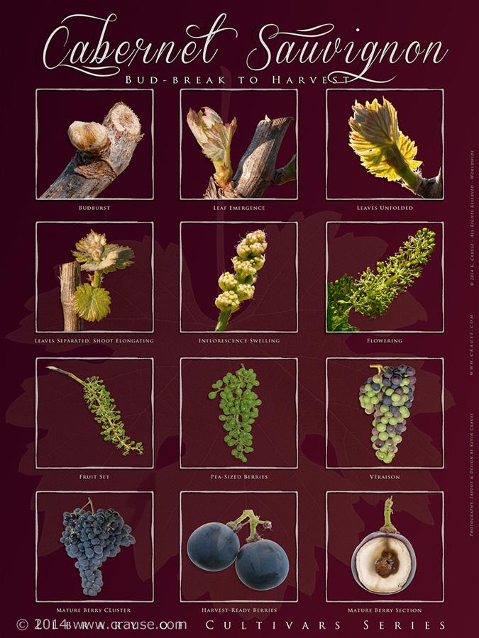 Cultivars_24.jpg