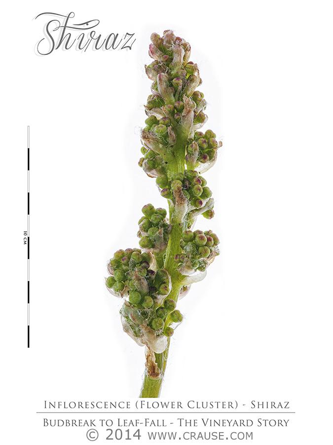 Cultivars_05.jpg