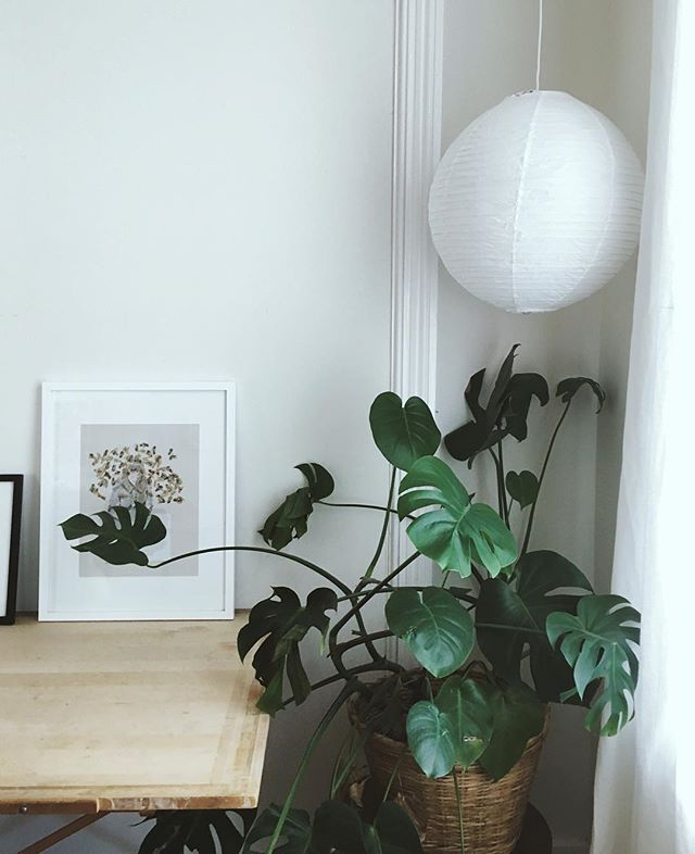 Plant + @cave.woman print