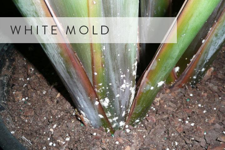 03-white-mold.jpg