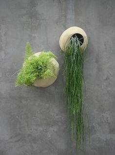 looking contemporary on display in these wall mounted pots. image source www.pinterest.com/ipulledthatlook