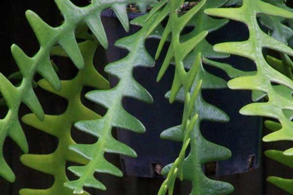 Balcony Plant Design