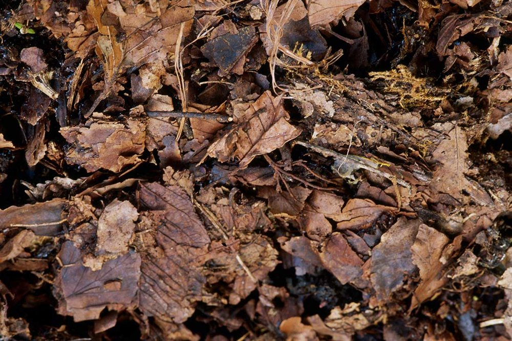 Leaves make for great mulch