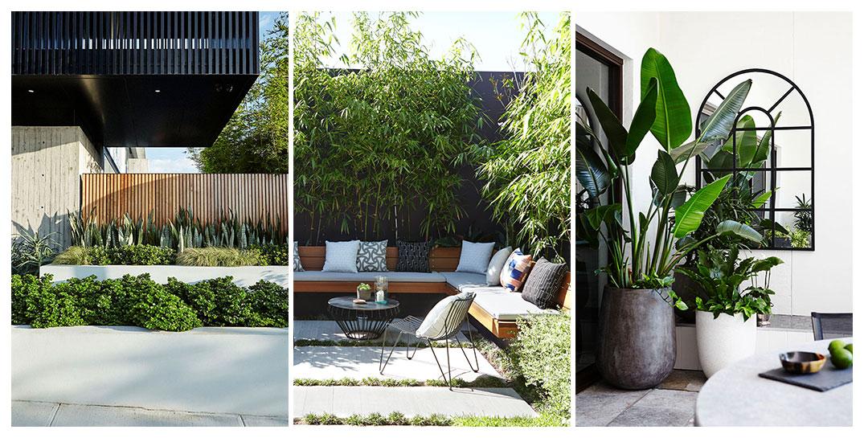 Adam Design adam robinson design - sydney landscape designer