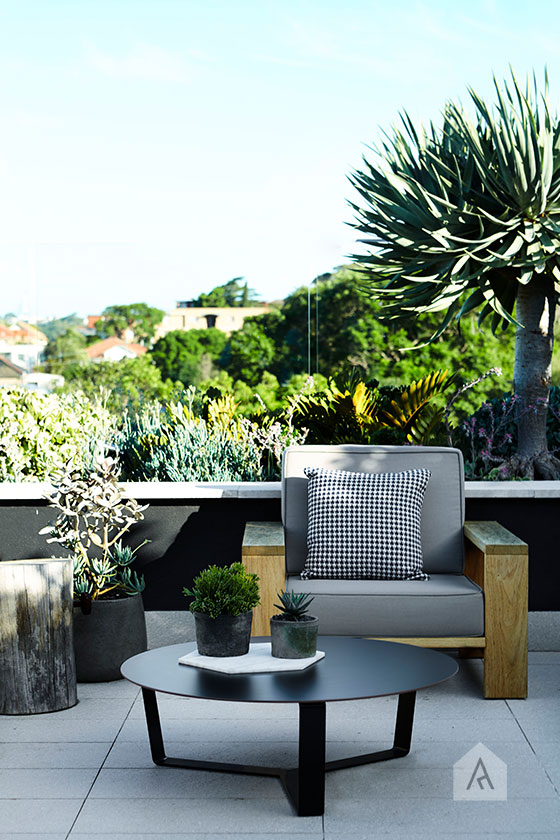 © Adam Robinson Design Sydney Outdoor Design and Styling Landscape Drummoyne Garden 04.jpg