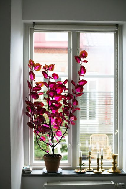 Adam Robinson Design Plants Are Nature's Air Freshener 08.jpg