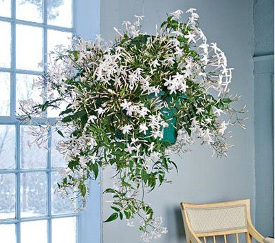 Adam Robinson Design Plants Are Nature's Air Freshener 09.jpg