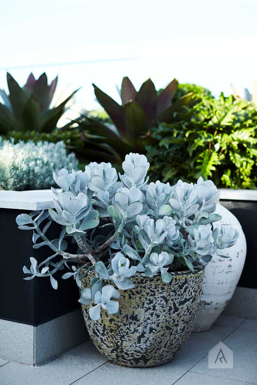 Consider the combinations of texture with your plants. Image from our  Drummoyne rooftop and balcony garden project