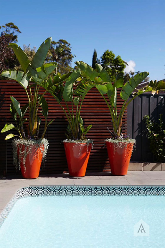 Inject some fun and scale like these potted banana palms in big red pots from our  St Ives Landsacape Design project .