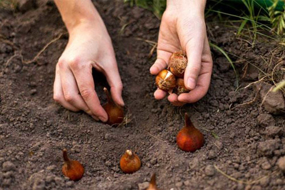 © Adam Robinson Design Planting Bulbs 1.jpg