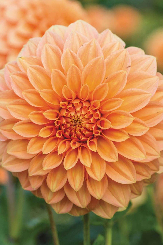 Image: tesselaar.net.au