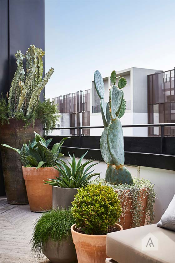 © Adam Robinson Design Sydney Outdoor Design Styling Rooftop Balcony Garden Waterloo 04.jpg