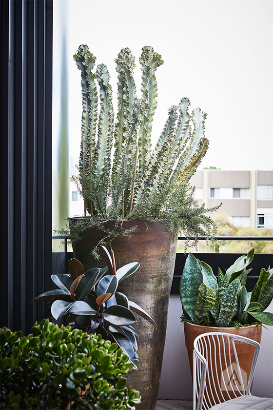 © Adam Robinson Design Sydney Outdoor Design Styling Rooftop Balcony Garden Waterloo 06.jpg