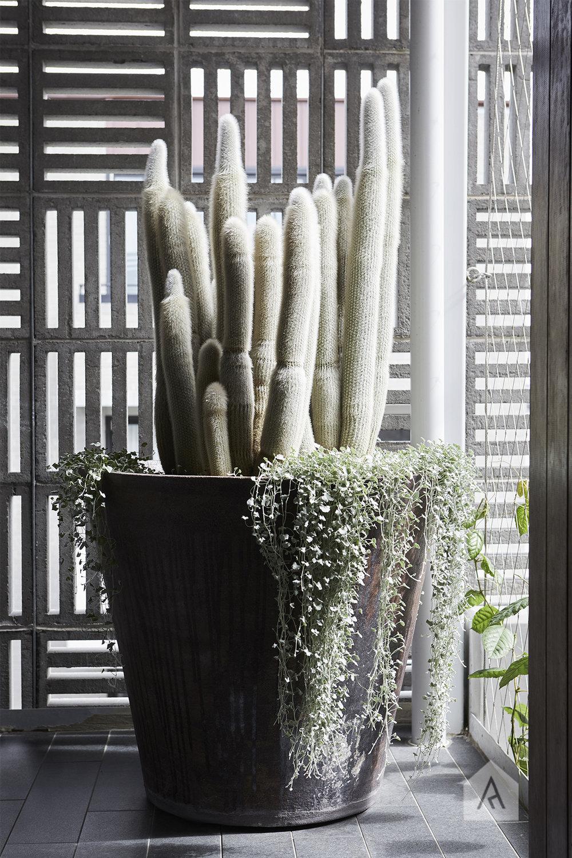 © Adam Robinson Design Front Garden 01.jpg
