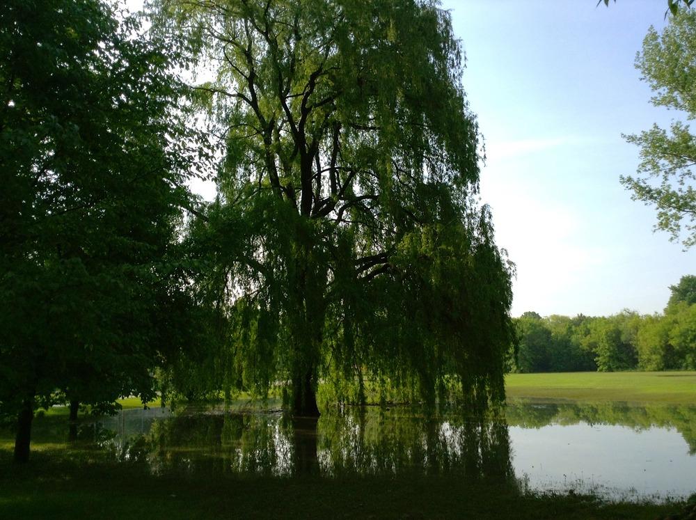 Nature'sReflection