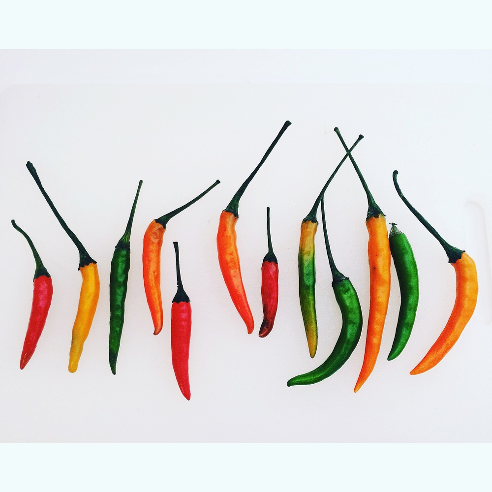 thai-chilis-©-darcy-wheeler.JPG