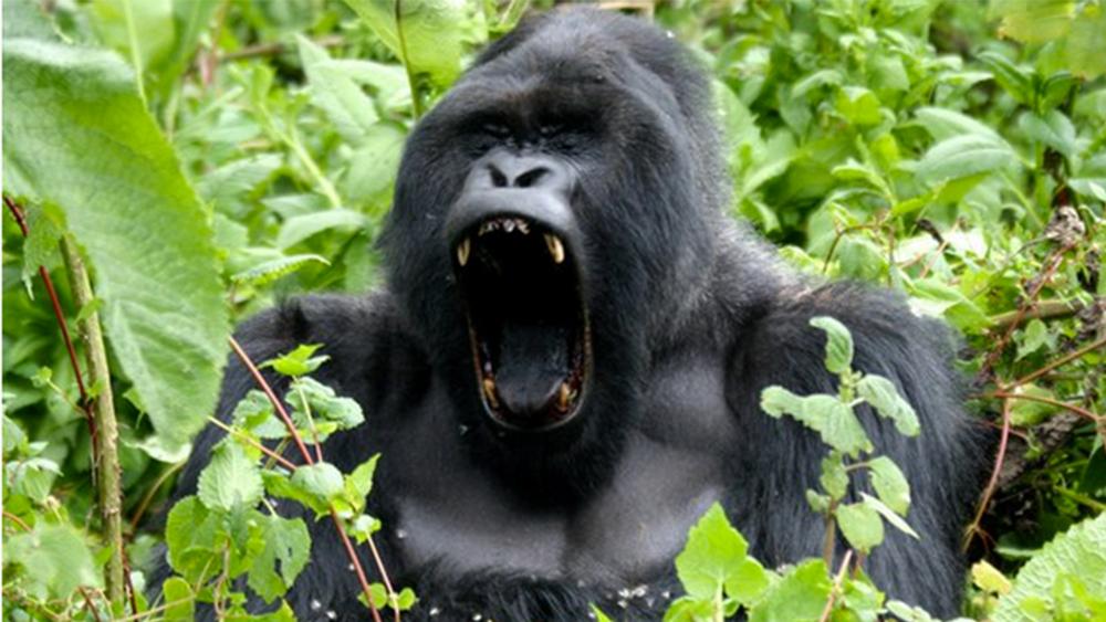 #09 uganda.jpg