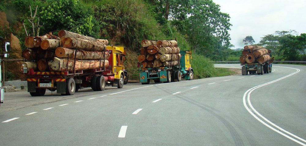 Malaysia-logging4.jpg