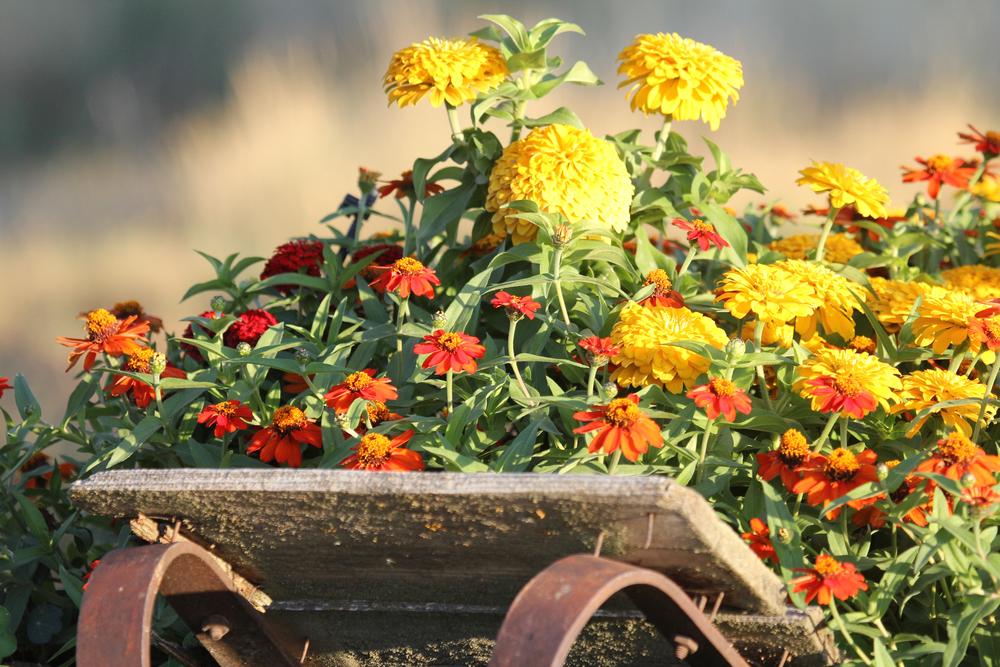 20120909 BVF flowers (6).jpg