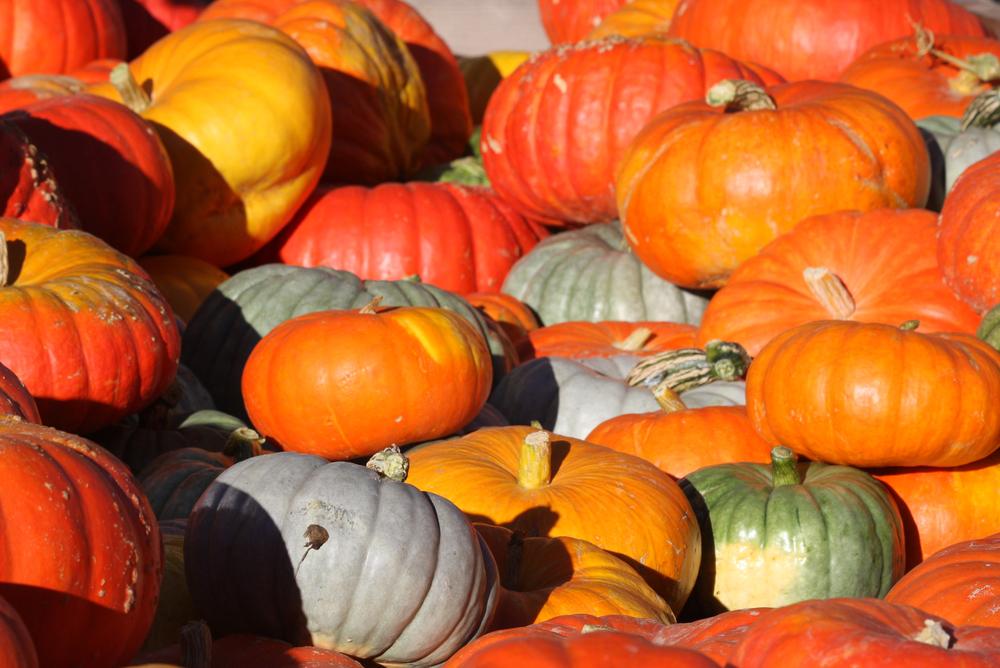 pumpkins at Farmers Market Oct 2008 (33).jpg