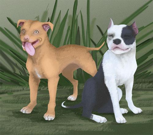 _American-Pit-Bull-Terrier