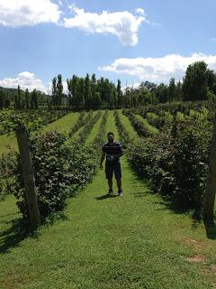 Berry+Farm.JPG