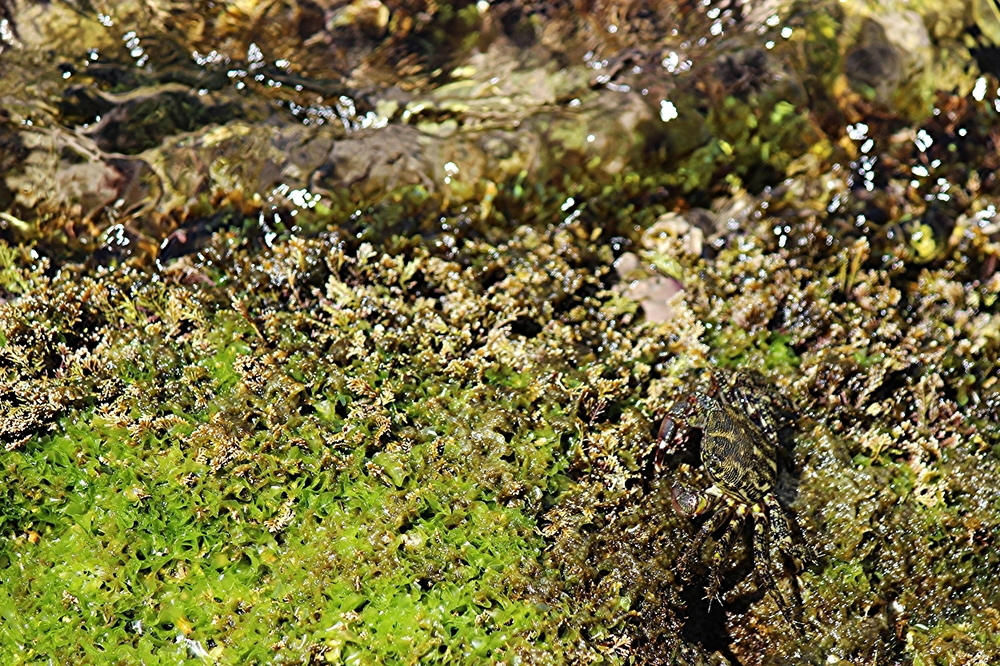 Can you spot the little crab?