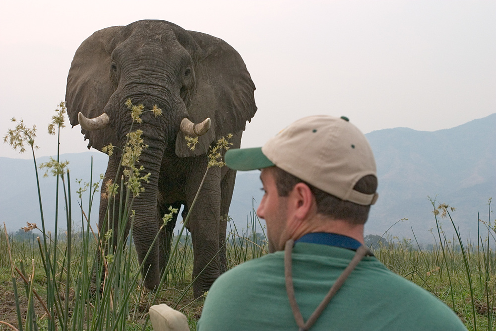 A canoe trip in Mana Pools offered up-close elephant encounters.