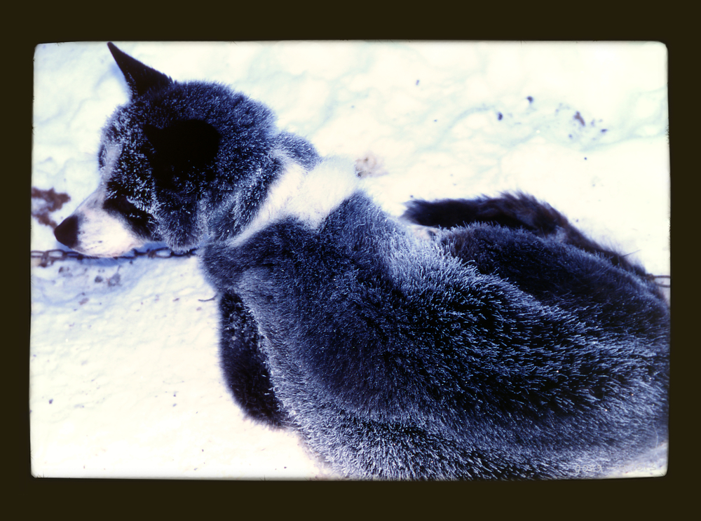 frostdog.jpg