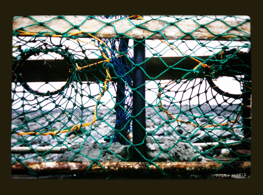fishnet.jpg