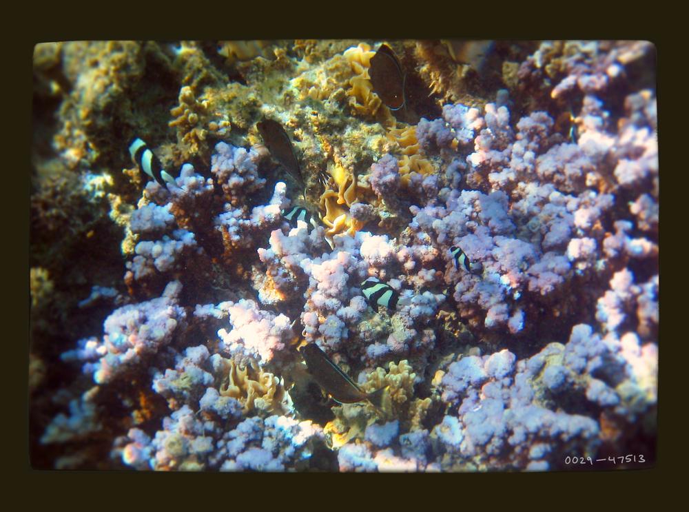 coral2.jpg