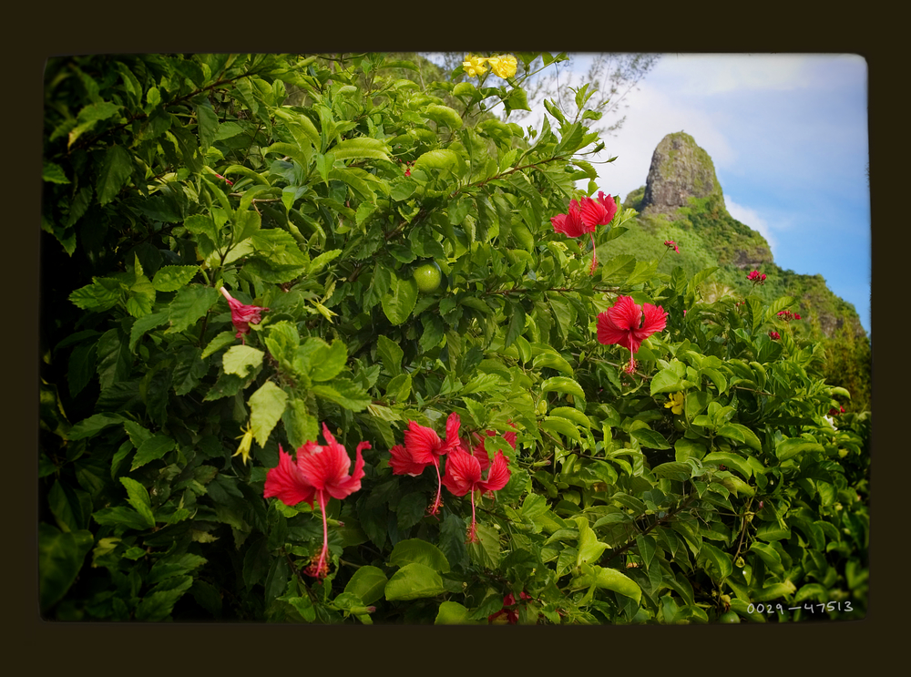 flowermtn2.jpg