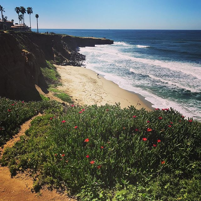 Nici's daily walking view. Not bad! I only get to see it for a couple hours, but hopefully it'll sustain me through the freezing weather back home in CO! #sunsetcliffssandiego