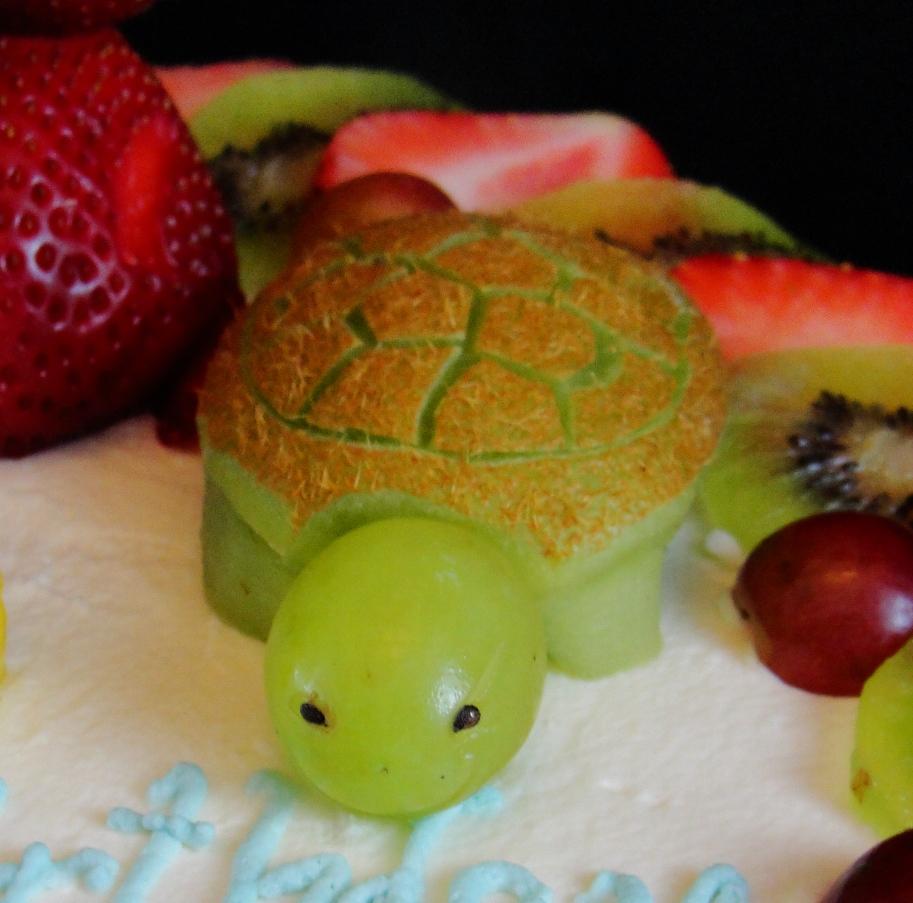 LBC 13F - Animal Fruit Kiwi Turtle.jpg
