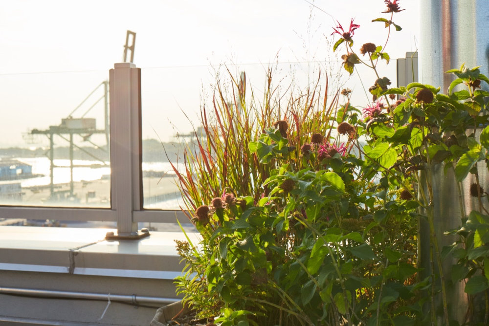 BRKLYN_COLUMBIA WATERFRONT_PENTHOUSE_F.jpg