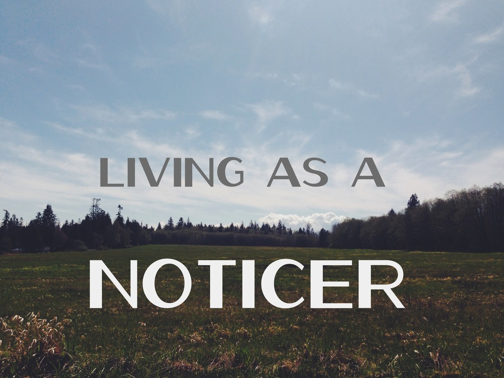 31 days of living as a noticer nadinewouldsay
