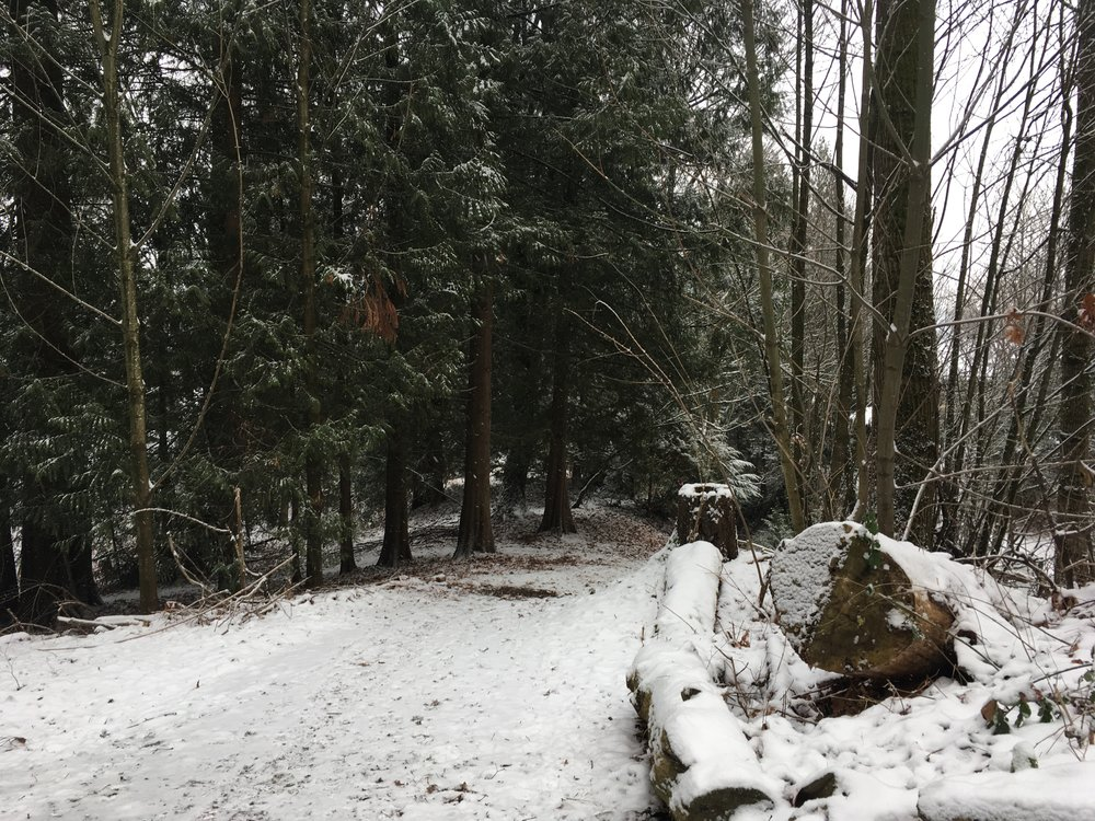 nadinewouldsay woods walk