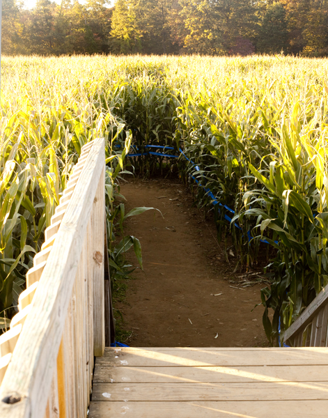 Visited a corn maze out in the NJ countryside this past weekend.